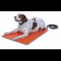 Dog on heating pad
