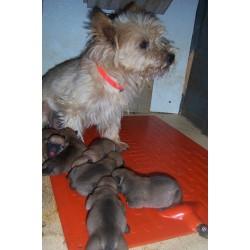 Puppies on Heating Pad