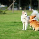 Kennel Ventilation Makes for Happy Healthy Dogs