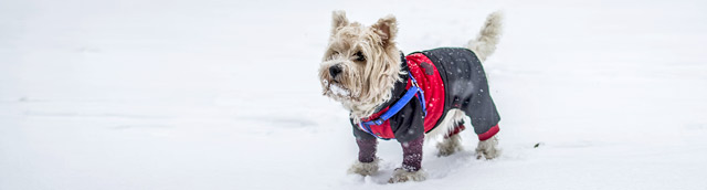 Dog in Winter Jacket