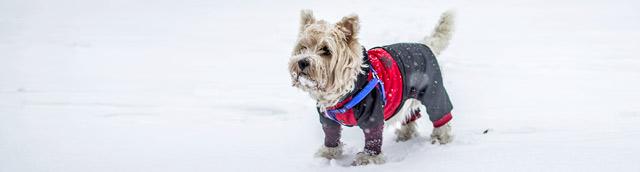 Dog in Winter Jacket