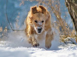 Dog in Winter Snow