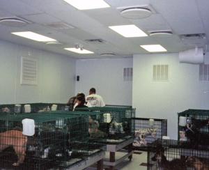 kennel-ventilation